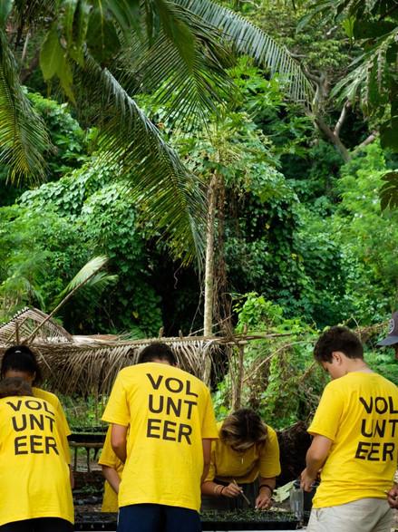 Vinaka Fiji seedling program