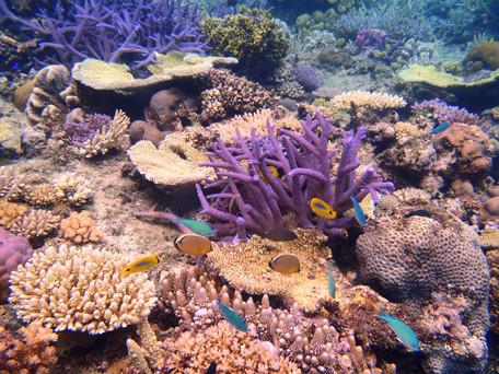 Coral garden in Fiji's Yasawa Islands