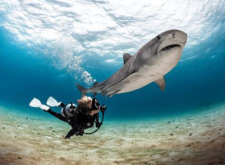 Tubarões - vilões ou vítimas?