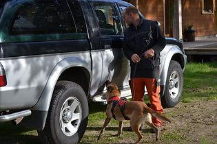formation-chien-detection-punaises-de-lit.JPG