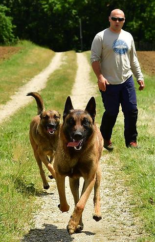 détection-canine-punaises-de-lit-bordeaux.jpg