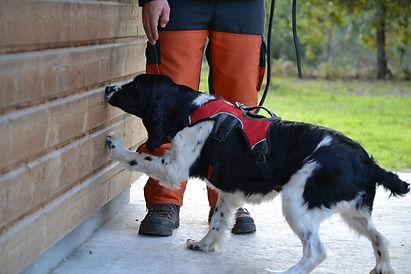 detection-canine-parasites-termites-punaises-de-lit.jpg