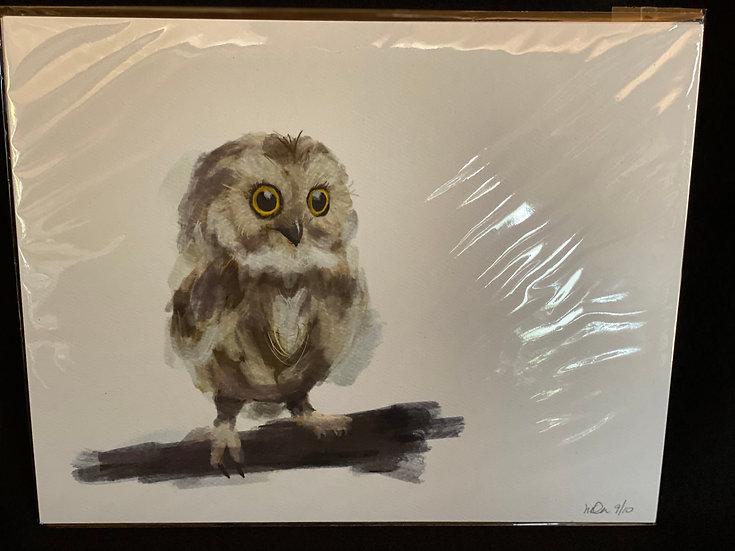 8x10 Owl Limited Edition Print