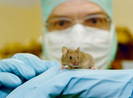 Crisis plans help animal facilities respond to the coronavirus pandemic