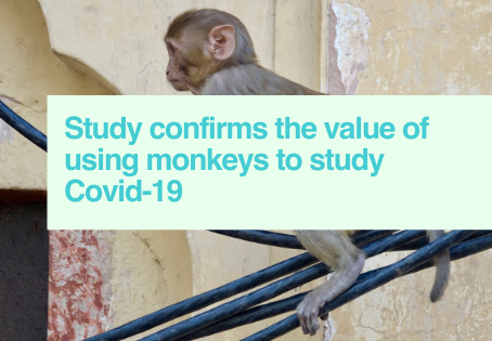 Monkeys for Covid-19 research