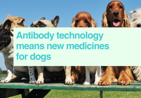 Antibodies for dogs