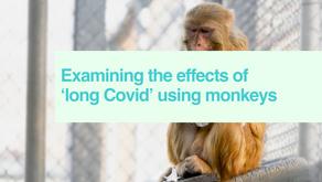 'Long Covid' in monkeys