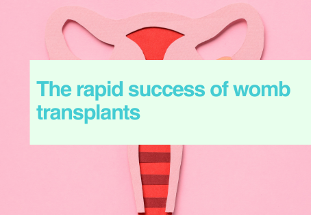 Womb transplants