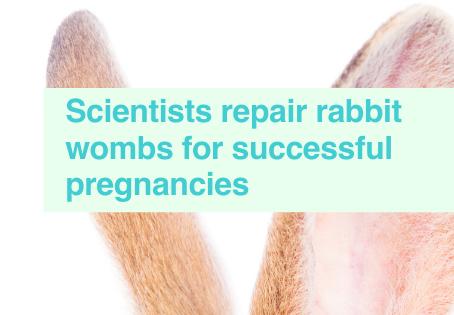 Rabbits wombs