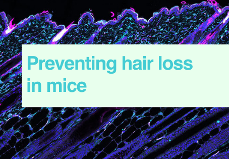 Hair loss in mice