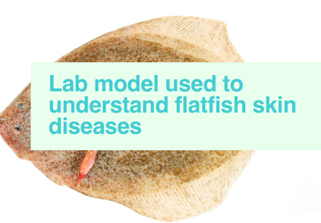 Flatfish skin diseases