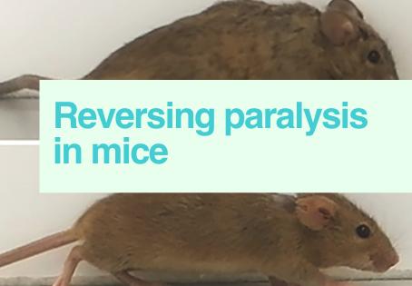 Reversing paralysis in mice