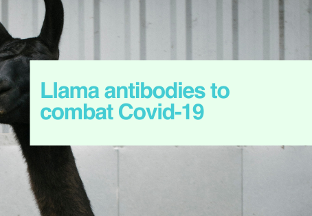 Llama antibodies Covid-19