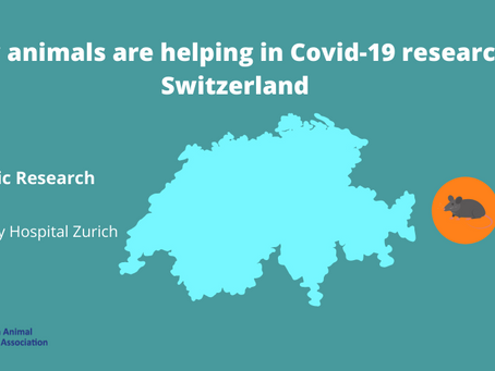 Research in Switzerland uses animals to find effective treatments for Covid-19