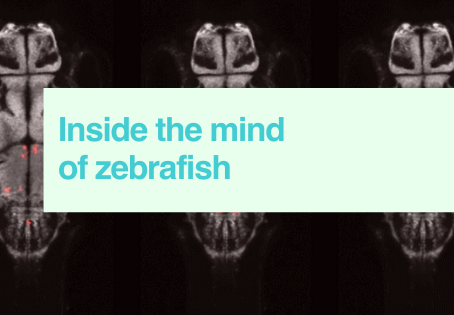 Inside the mind of zebrafish