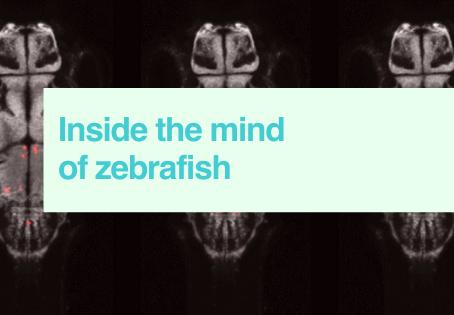 Inside the mind of zebrafish