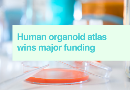 Organoid research secures funding