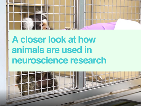 Animals in neuroscience research