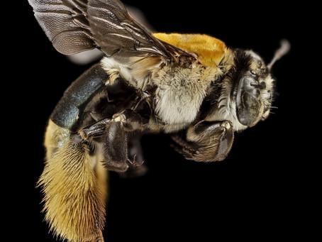 Bee and human brain similarities revealed