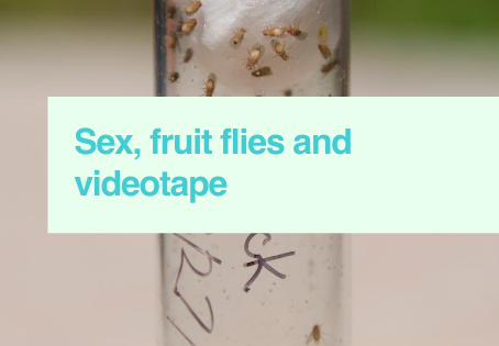 Sex & fruit flies