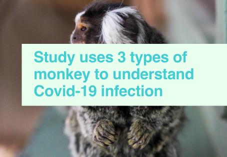 Covid-19 & monkey research