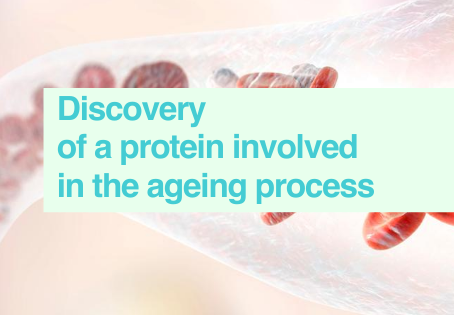 Discovery of ageing protein