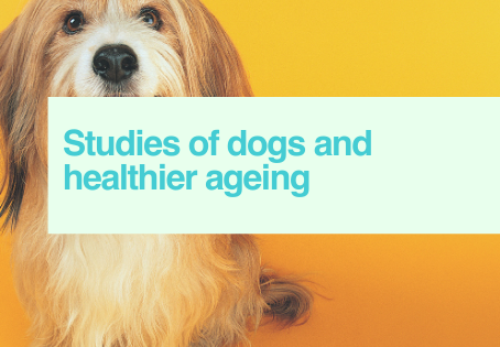 Dogs & ageing
