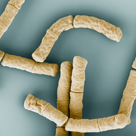 Stripping down bacterial armour: a new way to fight anthrax