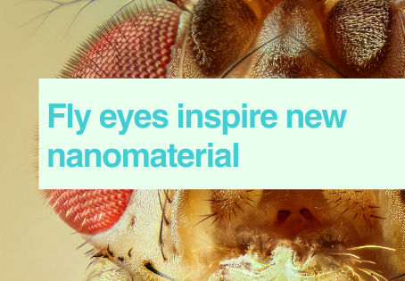 Fruit fly nanomaterial
