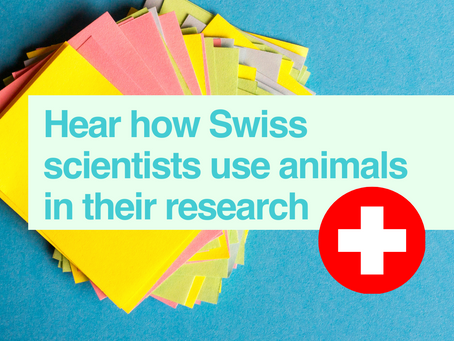 Scientists in Switzerland talk about their research using animals