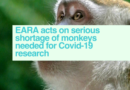 Monkey shortage for Covid-19 research