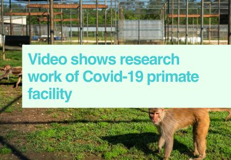 Primates in Covid-19 video