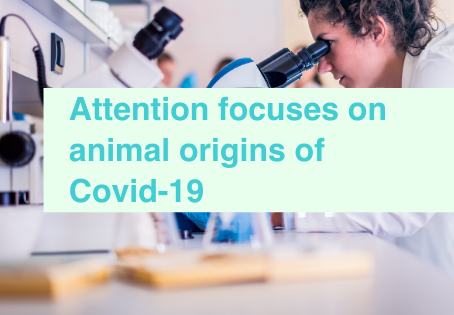 Animal studies and Covid-19 origins