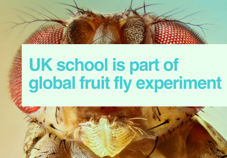 UK schoolchildren part of fly experiment