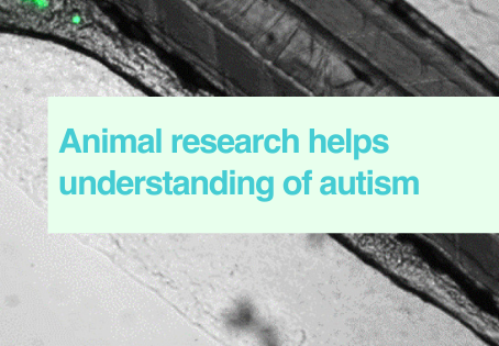 Animal research & autism