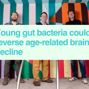 Gut bacteria rewind ageing brain