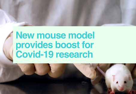 Covid-19 mouse model