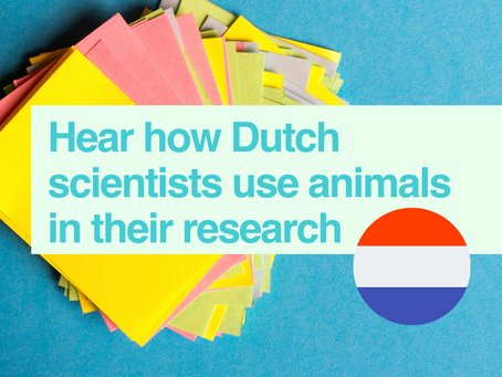 Scientists in the Netherlands talk about their research using animals