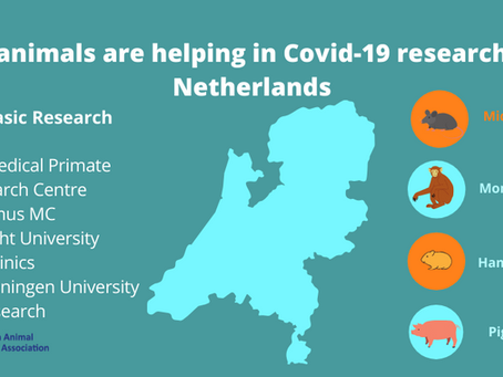 Research in the Netherlands uses animals to find effective treatments for Covid-19