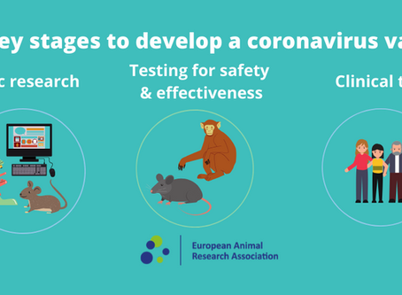 Infographics: The key stages to develop a Covid-19 vaccine