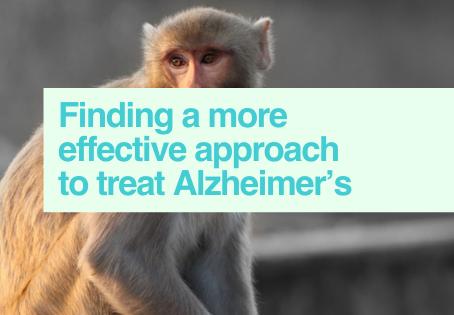 Alzheimer's studies animal models