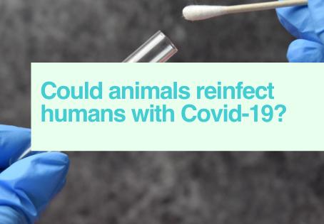 Animals & Covid-19