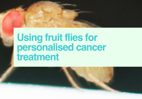 Fruit flies & cancer