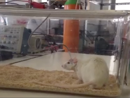 Electronic modulation used in rats to treat diabetes