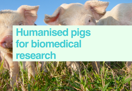 Humanised pigs