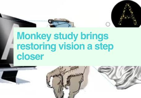 Restoring vision in monkeys