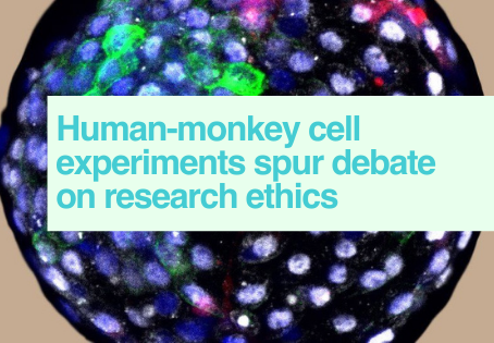 Human-monkey cell research