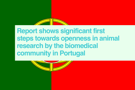 Portuguese transparency report 2020