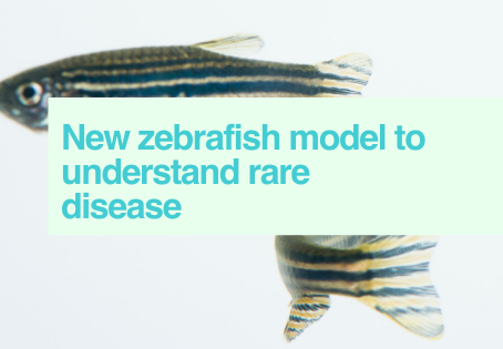 Zebrafish & rare disease