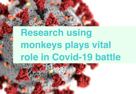 Covid-19 research using monkeys